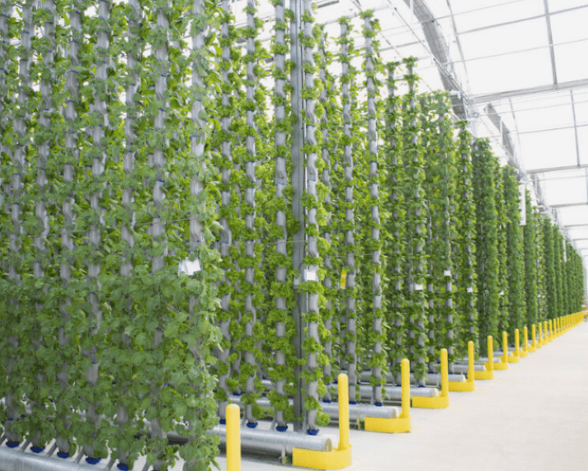 Eden Green Greenhouse Hydroponic Systems