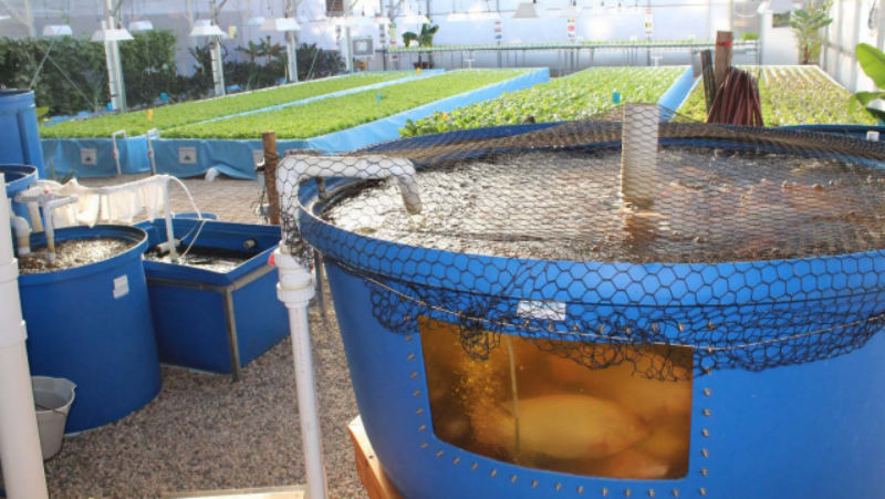 nelson pade commercial line clear flow aquaponic systems zdep